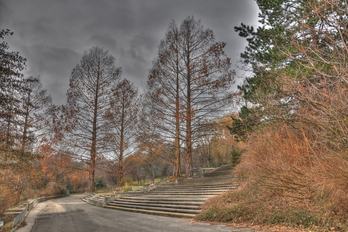 Bäume in HDR