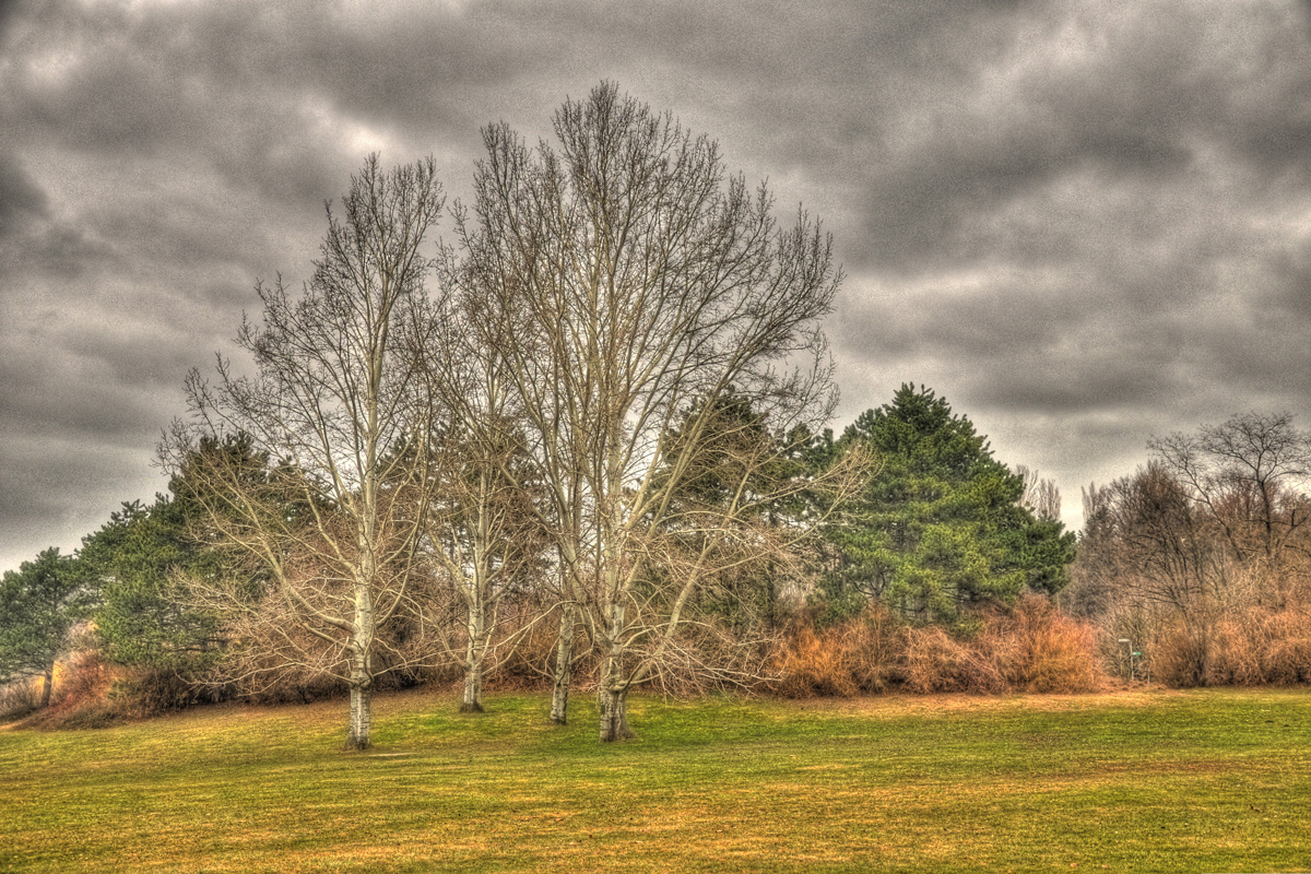 Baum in HDR