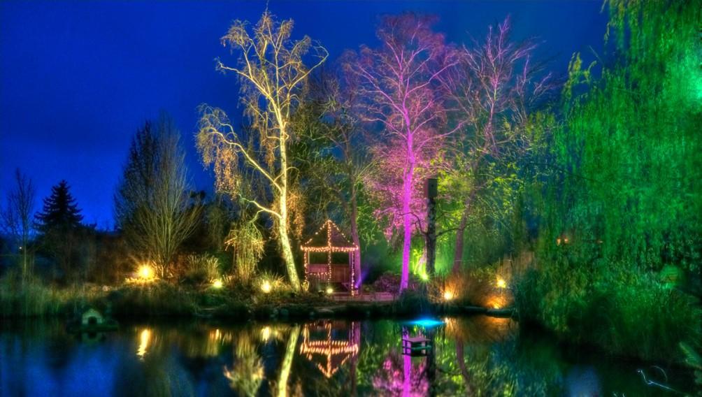 die zwei weißen Birken farbig beleuchtet
