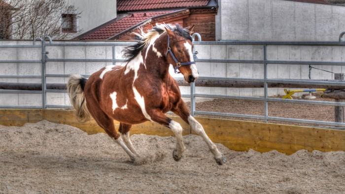 pferd-reiterhof-pichlbauer