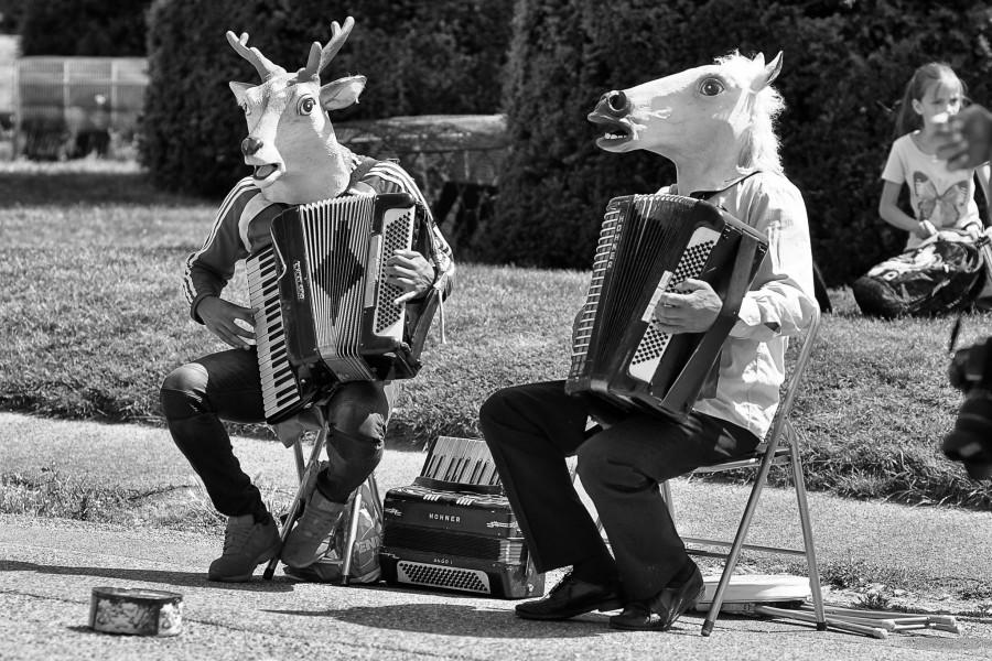 tierische Musik