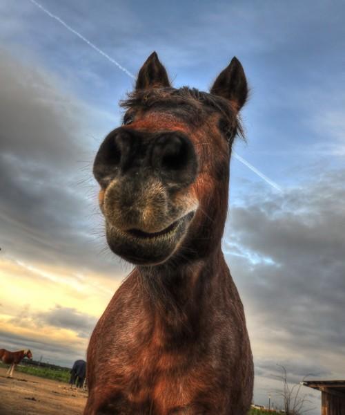 Wenn Pferde lächeln